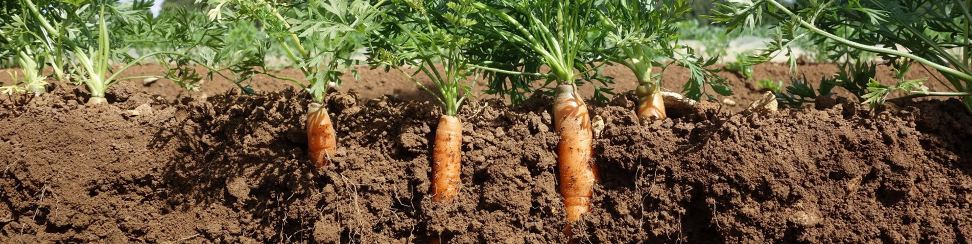 Drop in organic farmland despite growing market for Organic soil uk
