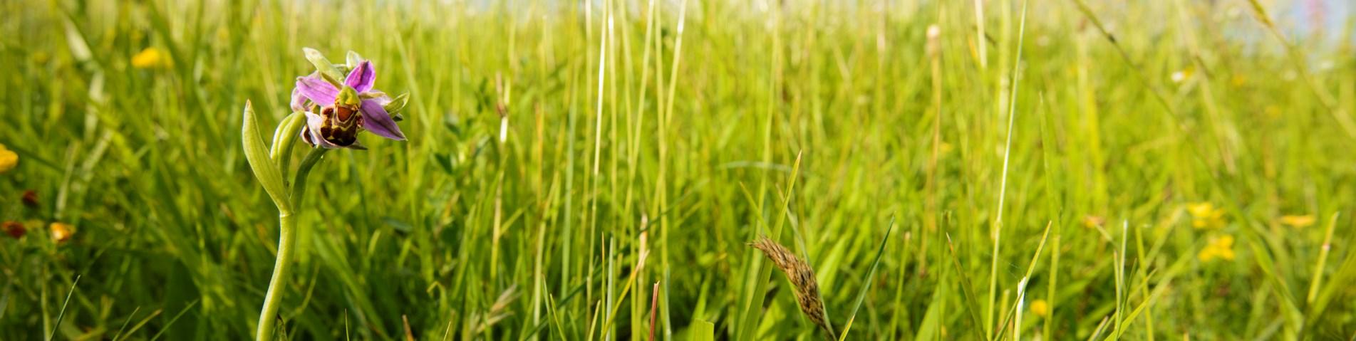 Organic Farming   Soil Association