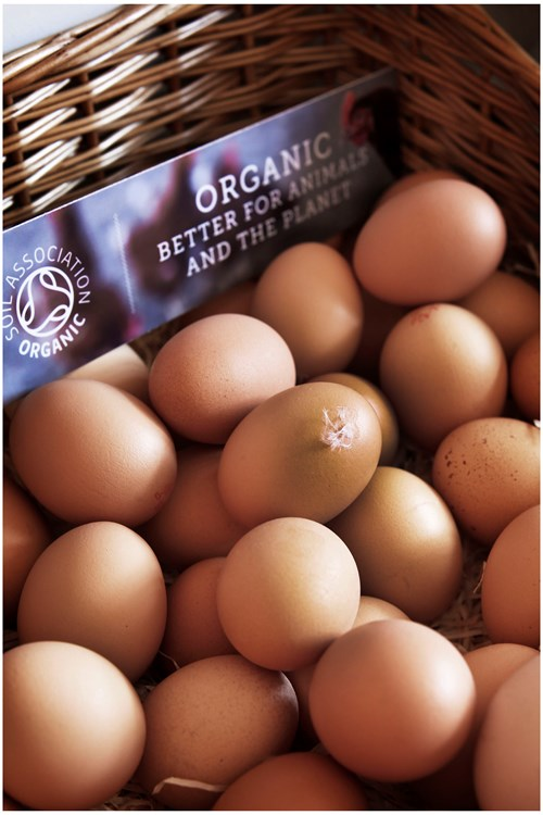 soil association organic eggs