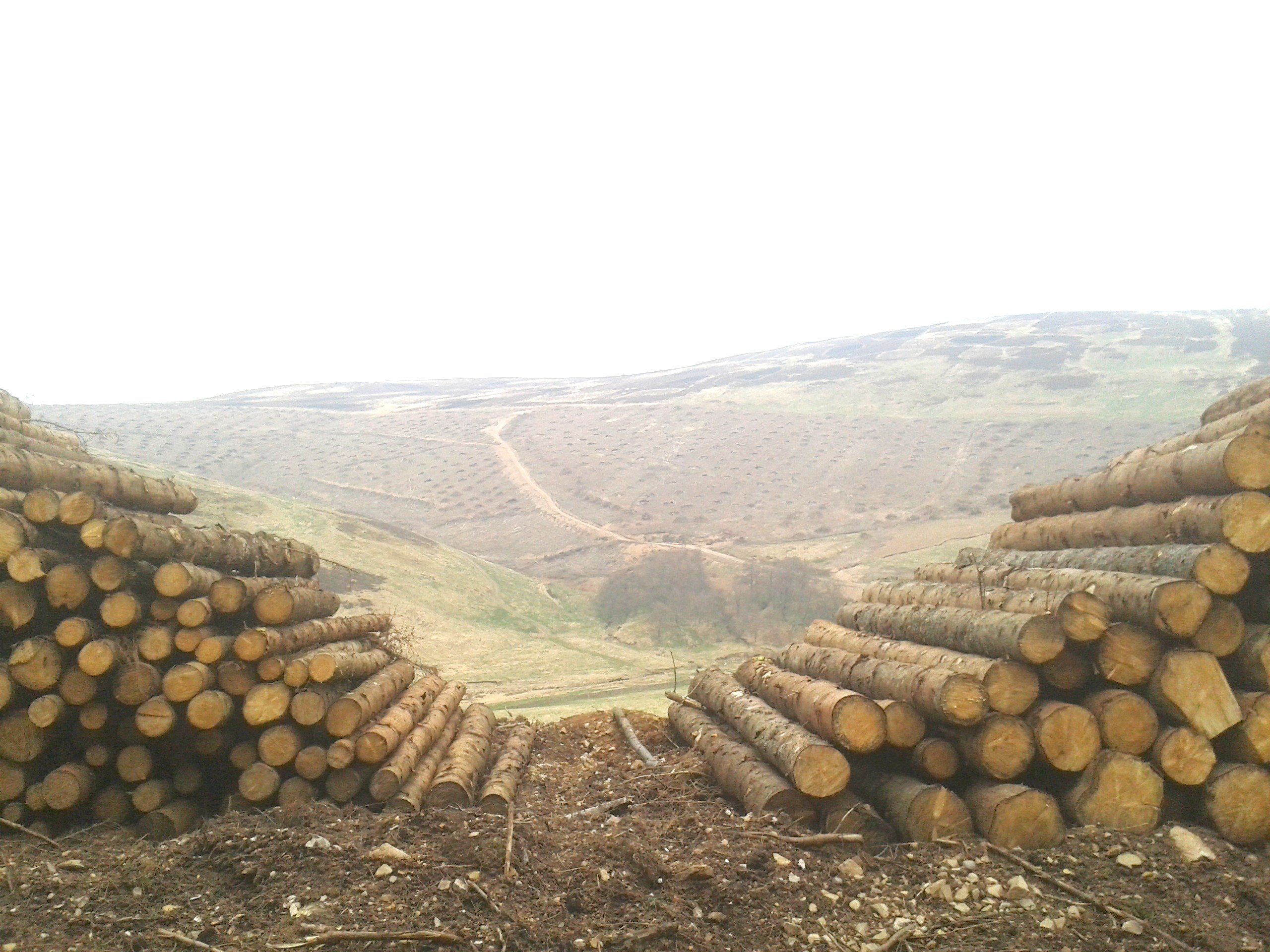 Timber stacks with view of recently clearfelled compartment _lightened.jpg