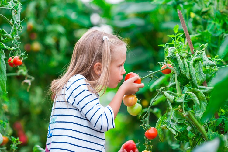 child smelling a tomato