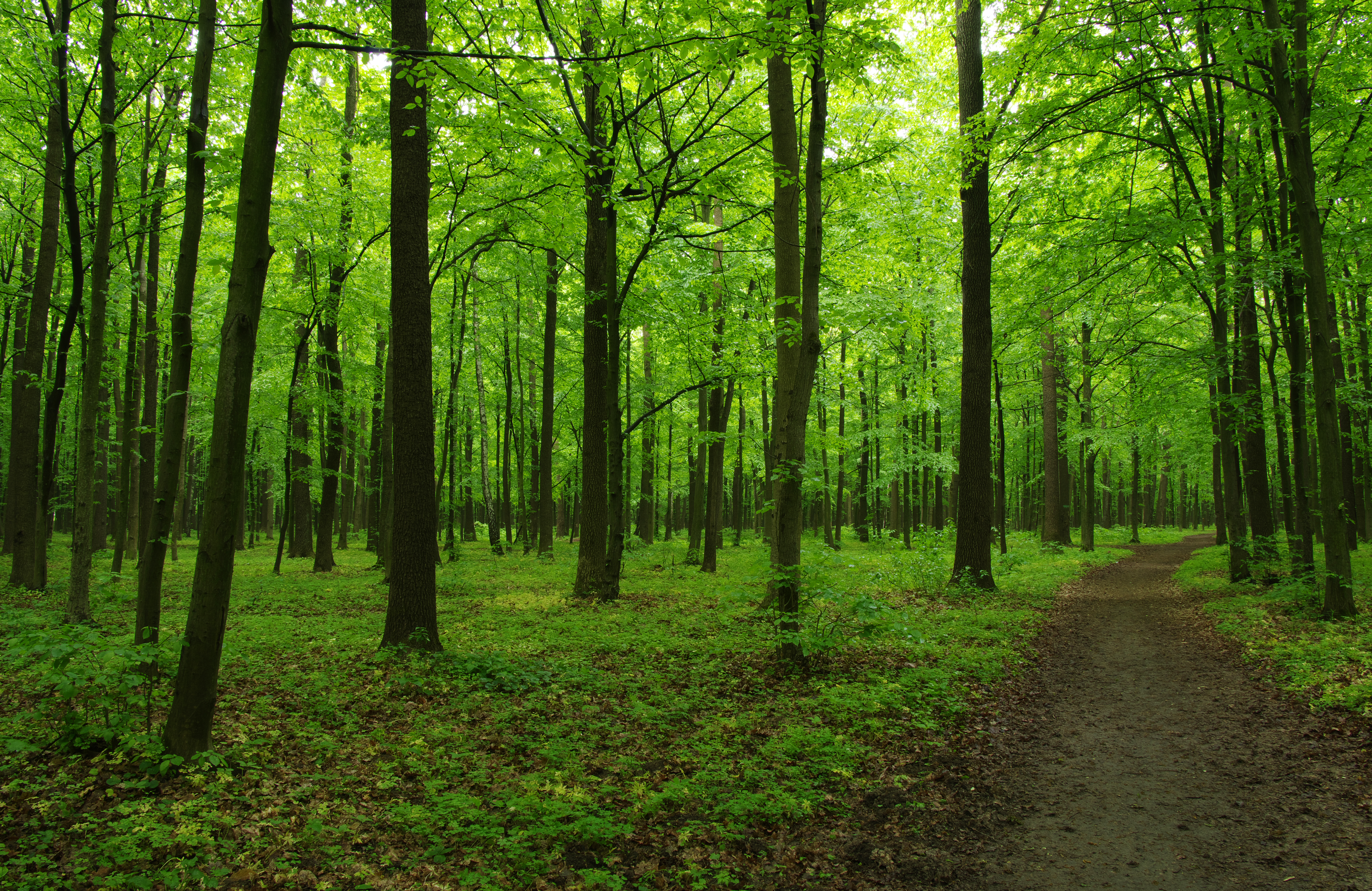 Image of green forest