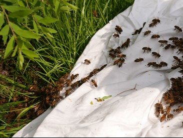 bees on a bedsheet