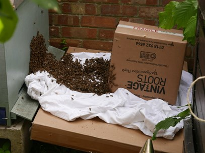 bees on a bedsheet and wine crate