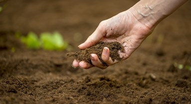 How Can We Achieve Healthy Soils in the UK?