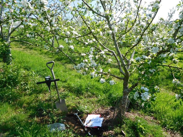 Collecting baseline data - taking soil samples in our orchard