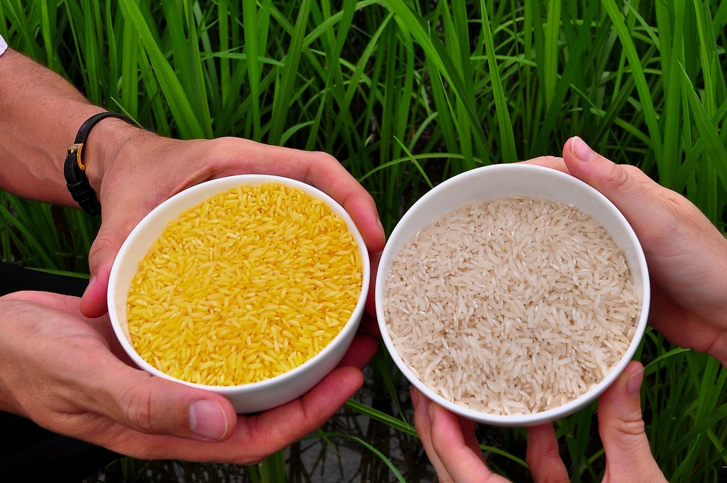 Golden Rice & GM's false promises