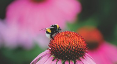Major Study Reveals Wild Bee Decline