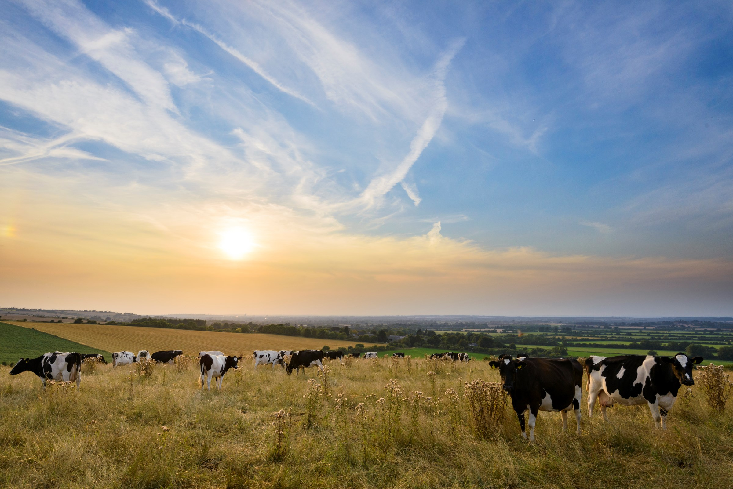 Protecting Food And Farming Standards