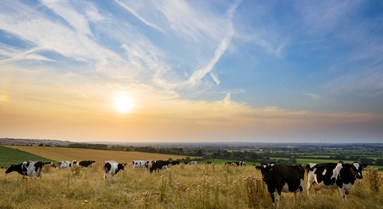 Food and Farming Beyond Brexit