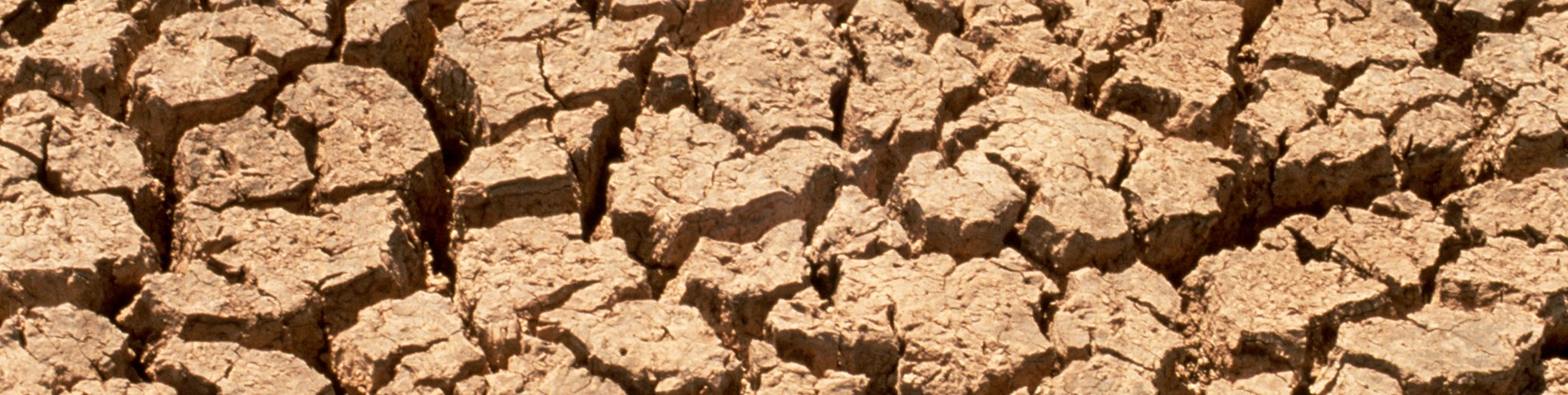 CSIRO_ScienceImage_607_Effects_of_Drought_on_the_Soil.jpg