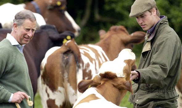 Prince Charles and Prince William looking at cows