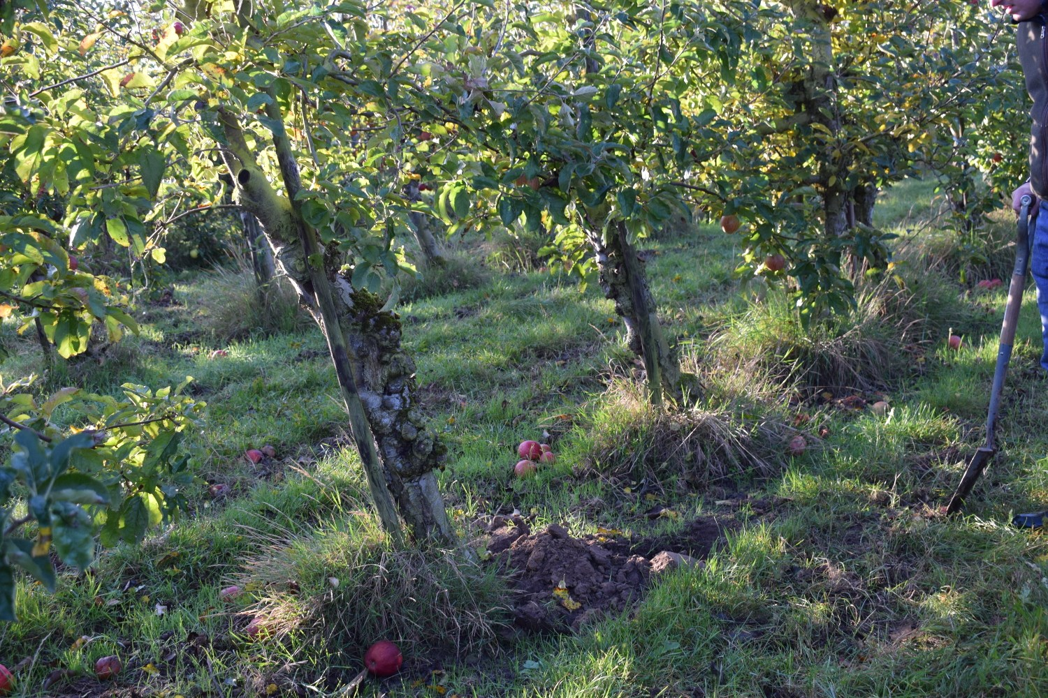 Agroforestry at Eastbrook