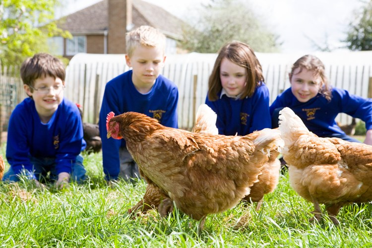 school children and chickens on farm