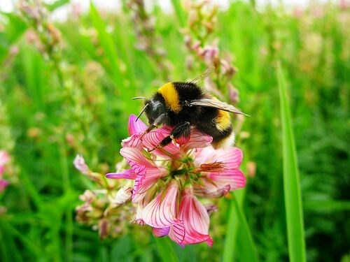 A bee-utiful spring day: Measuring pollinators' benefit on crop yields