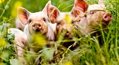 High animal welfare, not routine antibiotic use