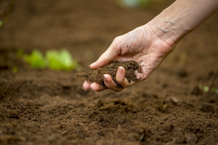 soil and hand
