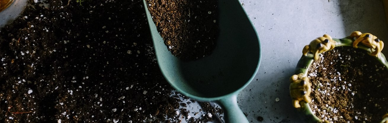 Soil-Saving Plants You Can Grow At Home