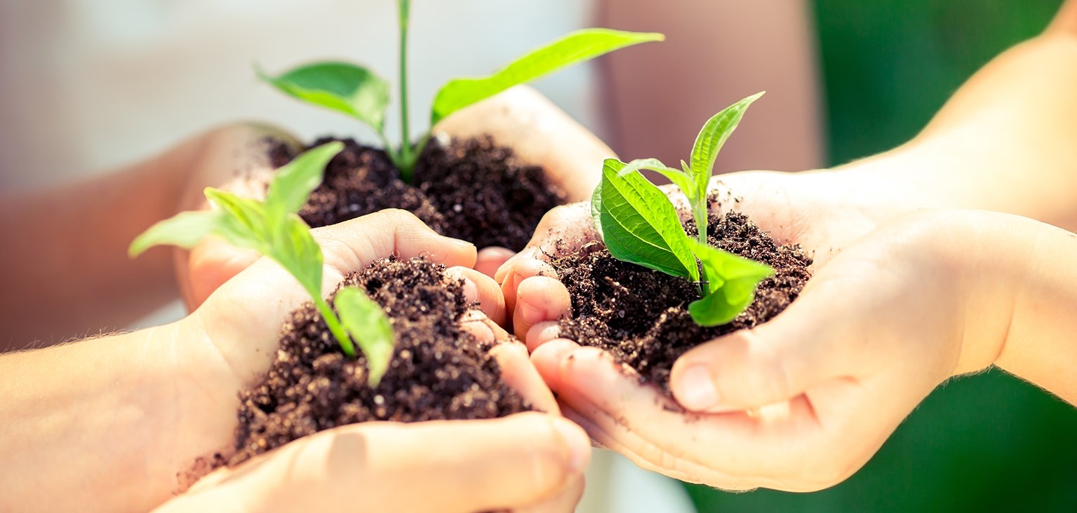 soil and plants in hands - website, light.jpg